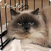Adopt A Pet :: Jo-Jo - Ocean City, NJ