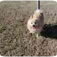 Adopt A Pet :: Brently - Chesapeake, VA
