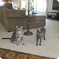Adopt A Pet :: Buster - Laguna Woods, CA