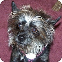Adopt A Pet :: Mya - Springvale, ME