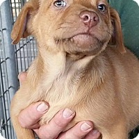 Adopt A Pet :: Benjamin - Gainesville, FL