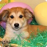 Adopt A Pet :: Hogarth - Modesto, CA