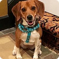 Adopt A Pet :: Piper - Milton, GA