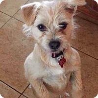 Adopt A Pet :: Harriet - Concord, CA