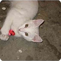 Adopt A Pet :: Flash - Jeffersonville, IN