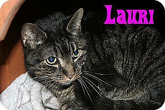 Domestic Shorthair Cat for adoption in East Stroudsburg, Pennsylvania - Lauren & Lauri