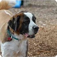 Adopt A Pet :: Tinkerbell - Ft. Myers, FL