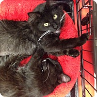 Adopt A Pet :: Sofie - Simpsonville, SC