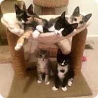 Adopt A Pet :: Katie's kids-Flash and Piggy - Bear, DE