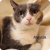Adopt A Pet :: Angela - Foothill Ranch, CA