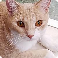 Adopt A Pet :: Pinky Tuscadero - St. Louis, MO