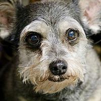 Adopt A Pet :: Max - Saint Augustine, FL