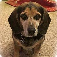 Adopt A Pet :: Hunter - Davenport, IA