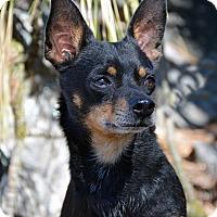 Adopt A Pet :: Charlie - Mountain Center, CA