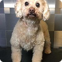 Adopt A Pet :: Granola - McKinney, TX