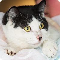 Adopt A Pet :: Festivus - Washburn, WI