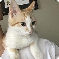 Adopt A Pet :: Squeak - Coppell, TX