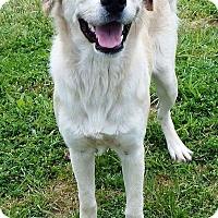 Adopt A Pet :: Joy - Terrell, TX