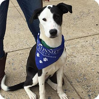 Border Collie Mix Dog for adoption in Potomac, Maryland - Colleen