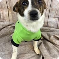 Adopt A Pet :: Peanut - Lake Elsinore, CA