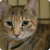 Adopt A Pet :: Tilly - Frederick, MD