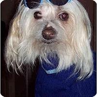Adopt A Pet :: Emo - Mays Landing, NJ