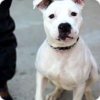 Adopt A Pet :: Batman - Tinton Falls, NJ