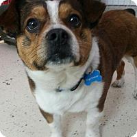 Adopt A Pet :: Kevin ADOPTION PENDING - Cedar Rapids, IA