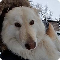 Adopt A Pet :: Foxy - Vaudreuil-Dorion, QC