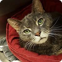 Adopt A Pet :: Radar - Chicago, IL