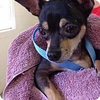 Adopt A Pet :: Zoe - Orlando, FL