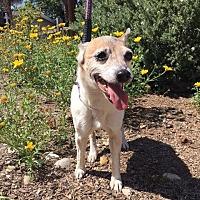 Adopt A Pet :: Bonnie(Teetee) - El Cajon, CA