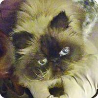 Adopt A Pet :: Phil - Davis, CA