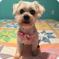 Adopt A Pet :: Lucy - Russellville, KY