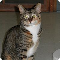 Adopt A Pet :: Rocky Road - Milwaukee, WI