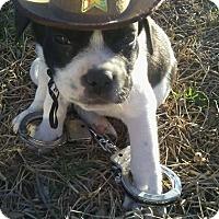 Adopt A Pet :: Yukon - Burleson, TX