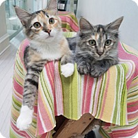 Adopt A Pet :: Starburst - Lutherville, MD