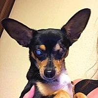 Adopt A Pet :: a389196   Kennedy - San Antonio, TX