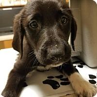Adopt A Pet :: Tamatoa - Ogden, UT