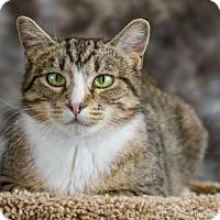 Adopt A Pet :: Felicia C1656 - Shakopee, MN