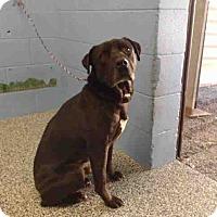 Adopt A Pet :: URGENTNOW!  San Bernardino - San Bernardino, CA