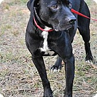 Labrador Retriever Mix Dog for adoption in Jackson, Mississippi - Dale Earnhardt