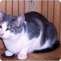 Adopt A Pet :: Gretel - Summerville, SC