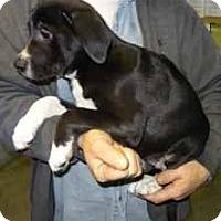 Adopt A Pet :: Piper - Antioch, IL