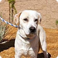 Adopt A Pet :: Mitchell - Canoga Park, CA