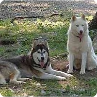 Adopt A Pet :: Sugar & Malachi - Belleville, MI