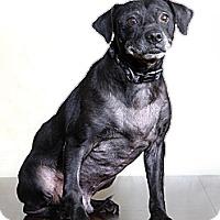 Adopt A Pet :: Marty - Dallas, TX