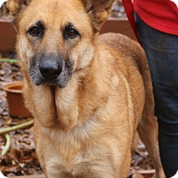 Adopt A Pet :: Country - hartford, CT