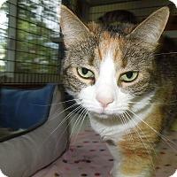 Adopt A Pet :: Cleo - Medina, OH