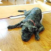 Adopt A Pet :: Peppina - San Antonio, TX